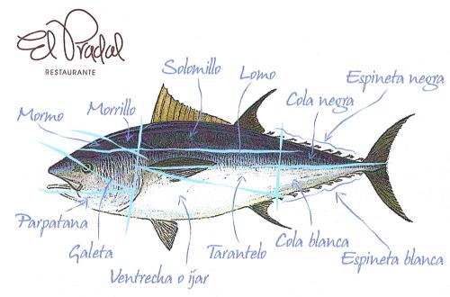 Diferentes partes de un atún