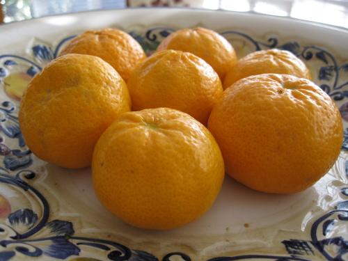 Ricas mandarinas recién cogidas del árbol, pequeños y fabulosos bocados emocionales